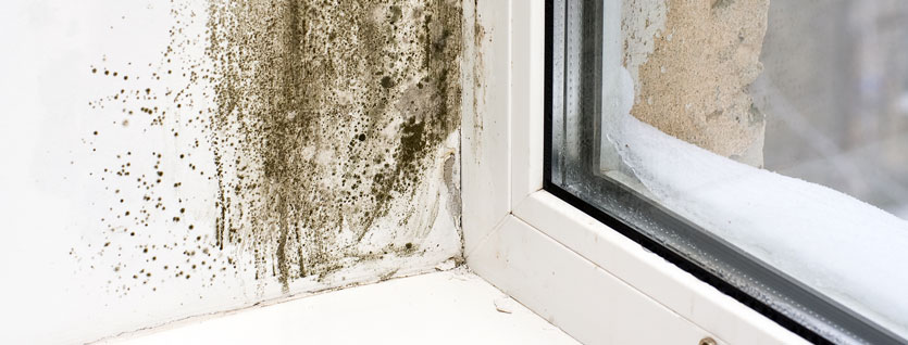 mold damage by window