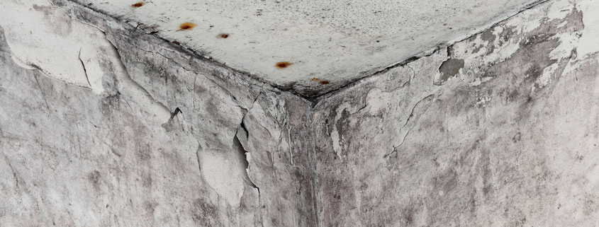 mold damage on wall